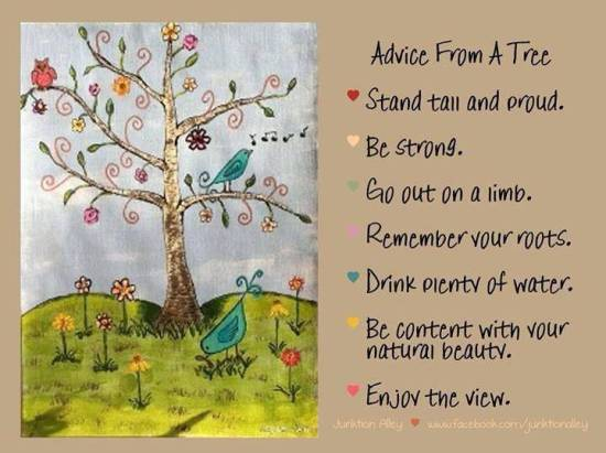 advice-from a tree